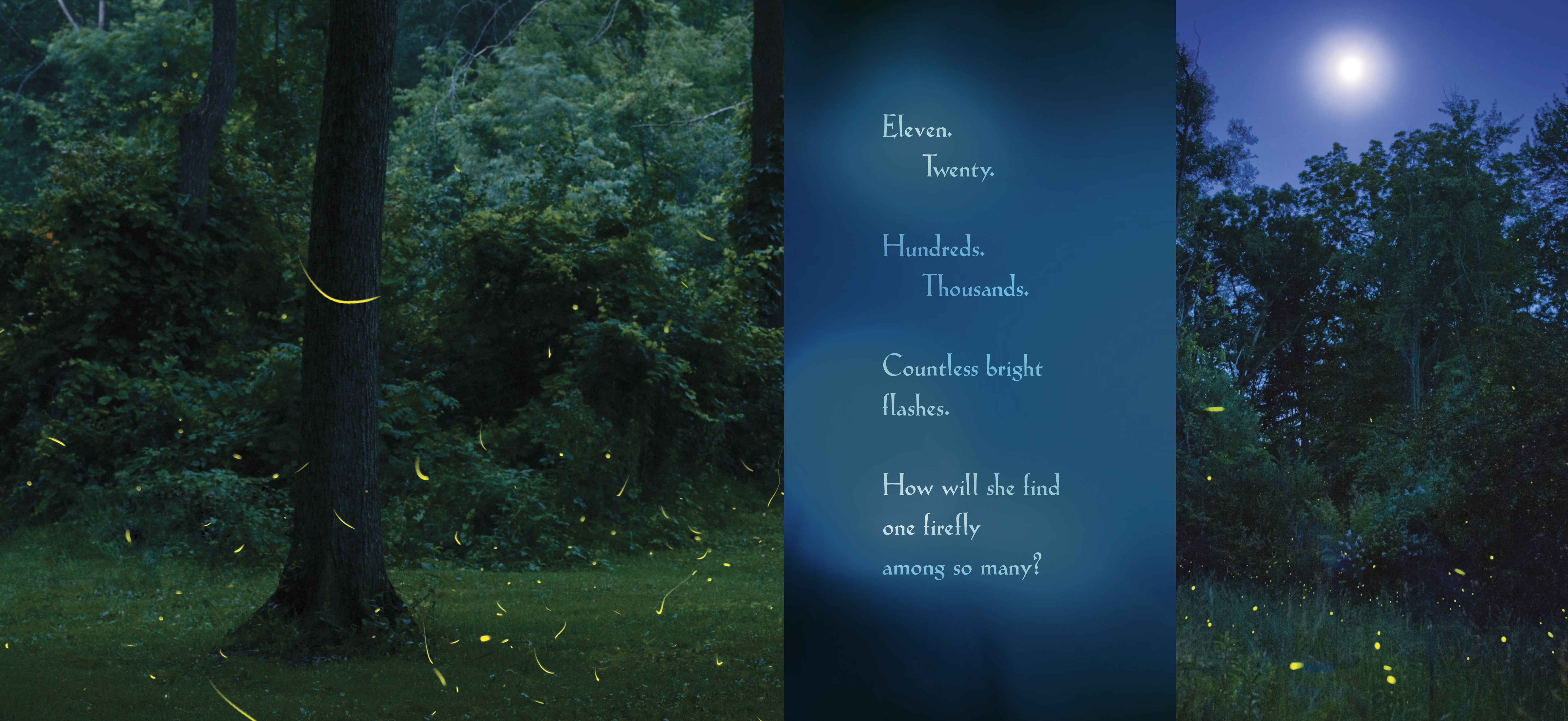 Interior spread for AMONG A THOUSAND FIREFLIES