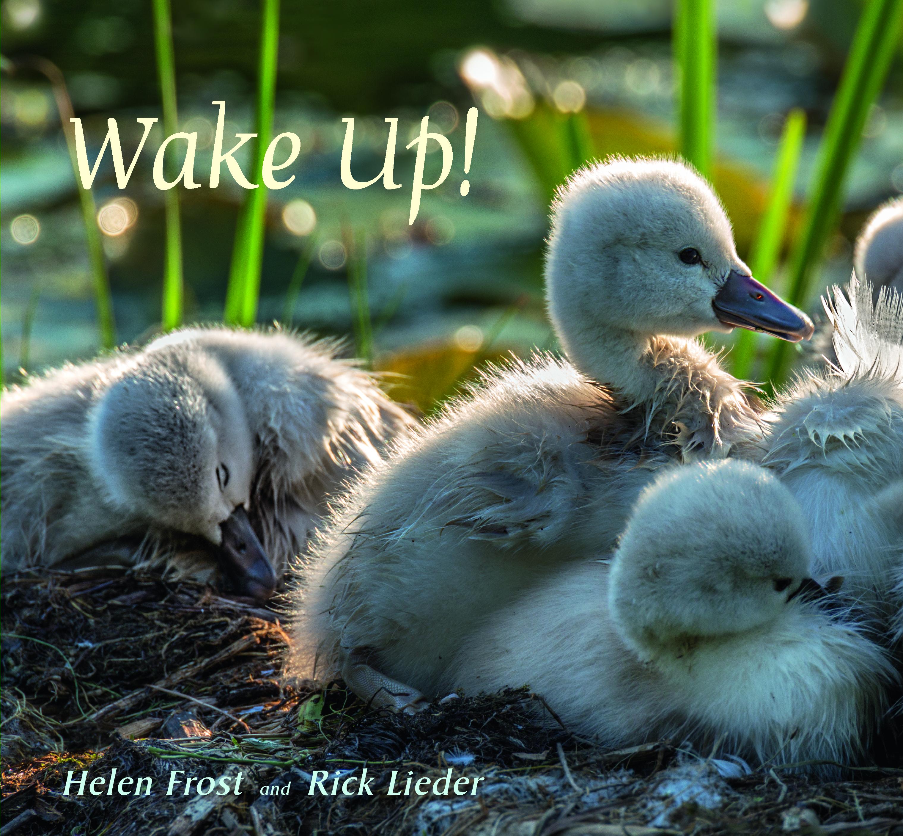 Jacket for WAKE UP!